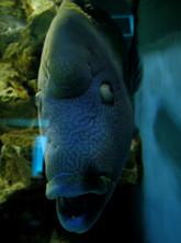 何だこの魚…
