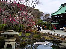 ほぼ1年中花が見られて、長谷寺は気合い入りまくりでした