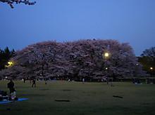 雰囲気的に代々木公園みたいだった