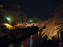 夜桜もキレイでした