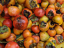 これが禅寺丸柿
