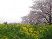 Kannge_1904_tatikawa03