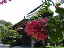 蓮にさるすべり…長谷寺は花が見事でした