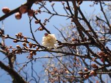春はまだまだ!(北鎌倉)
