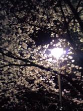 夜桜でテンション上がりました